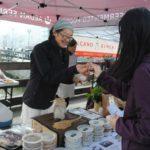 mariko-market-samples